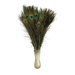 A PEACOCK FEATHERS  (İthal-10dal-80cm)