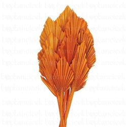 ZLI Kuru Çiçek C Palm Spear Orange(İthal-10dal-40-55cm)