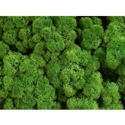 ZM Leacobryum CL Forest Green (İthal Yosun-1 kutu-4kg)